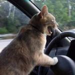 Idiot Drivers at Work