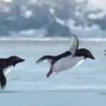 flying penguins 75x75