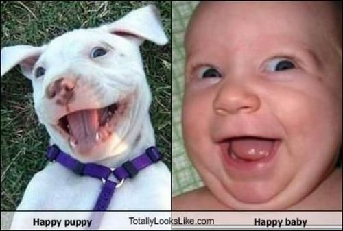 happy puppy baby