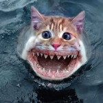PETA Brings us the Sea Kitten