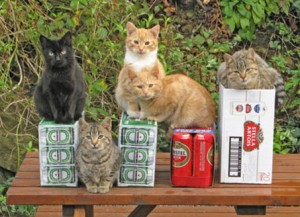 large beer kittens 300x217