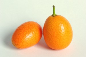 Kumquat 02451 300x200