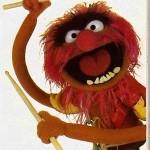 muppets animal 75x75