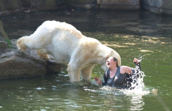 polar bear attack1 560x361