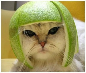 lime hat1 300x256