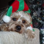 Pets In Christmas Costumes: A Very Unhappy Photo Gallery