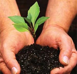 plant a tree 300x290