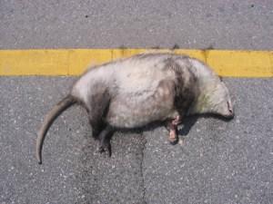 roadkill3 300x225
