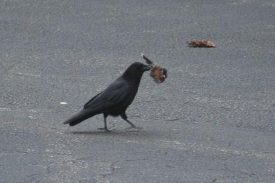 Bird Carnage 7 560x373