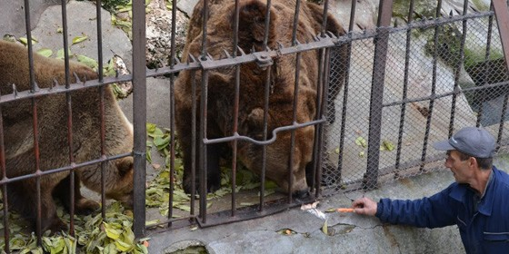 Bear Cage 560x280