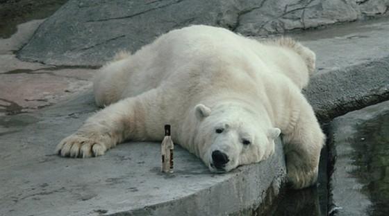 ours polaire zoo frisbee vidéo amateure veux tu rire 560x312