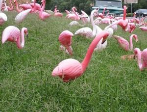 plastic flamingos 300x228