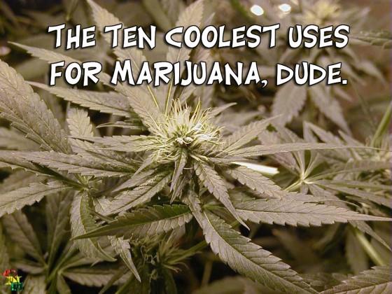 cannabis header 560x420