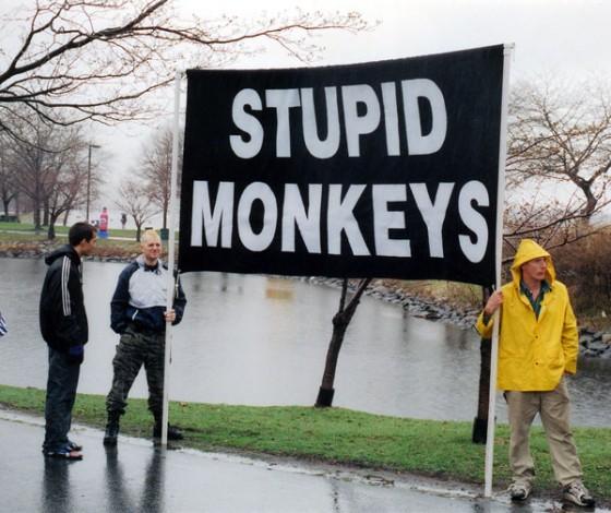 stupidmonkeys 560x470
