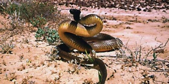 Snake 560x280