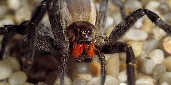 Spider 560x280
