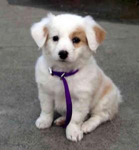 cute dog 278x300