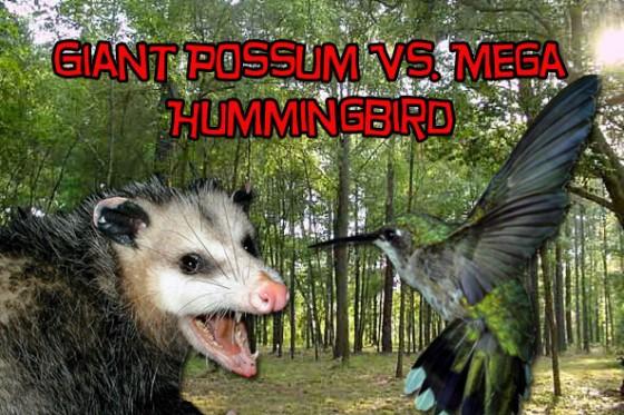 possum hummingbird 560x373
