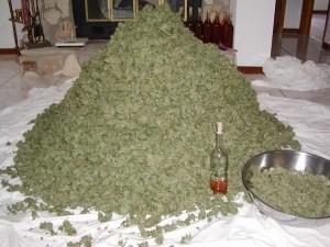 weed 300x225