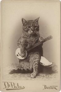 Banjo Cat 198x300