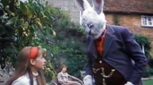 rabbits knibbles 300x167