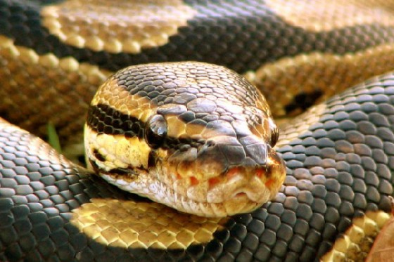 python 560x373