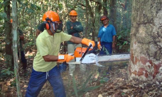 tree header 560x334