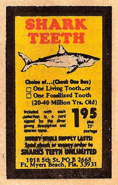 sharkteeth