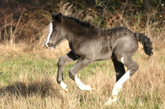 filly 560x372