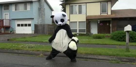 panda header 560x275