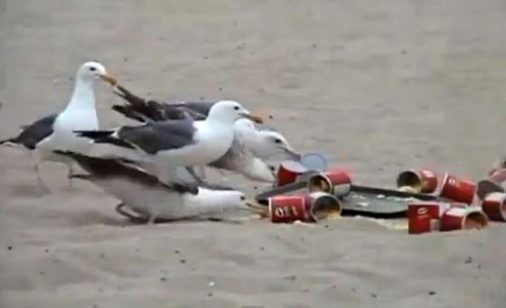 seagulls header 560x341