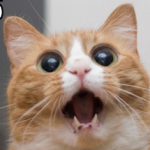 Why LOLcats Will Make You More Efficient at Work
