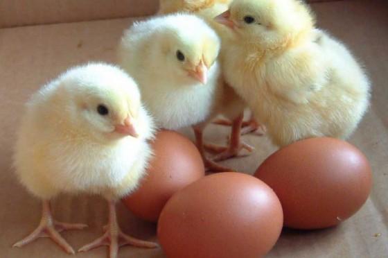 eggs2 560x372
