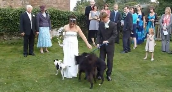 weddings fail 560x300