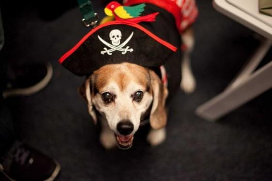 Dog Pirate 560x372