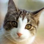 Cat Foiled in Jailbreak Attempt