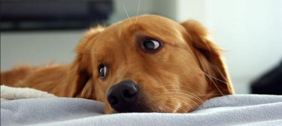 adorable puppy e1369335886491 560x252