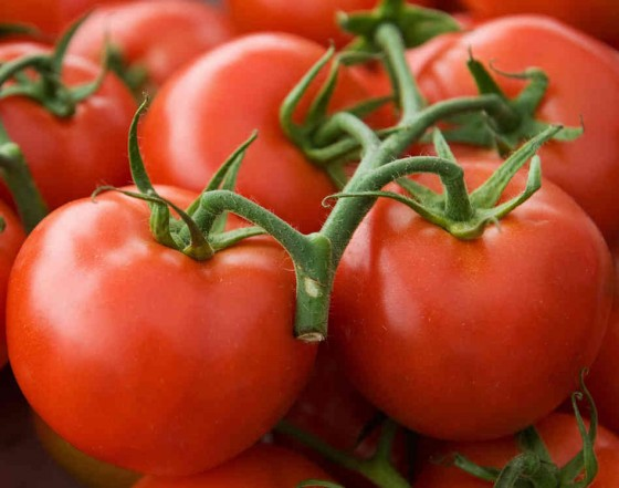 tomato 560x441