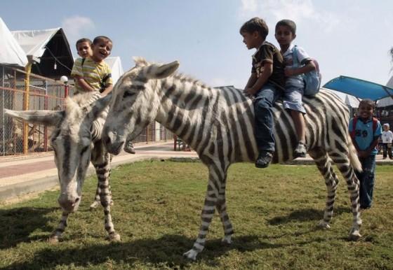 Zebra Donkey 560x386