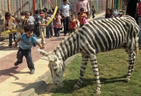 donkey zebra 02 560x383
