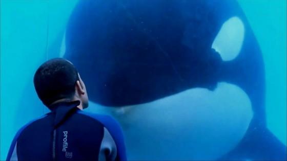 2013 blackfish 560x315