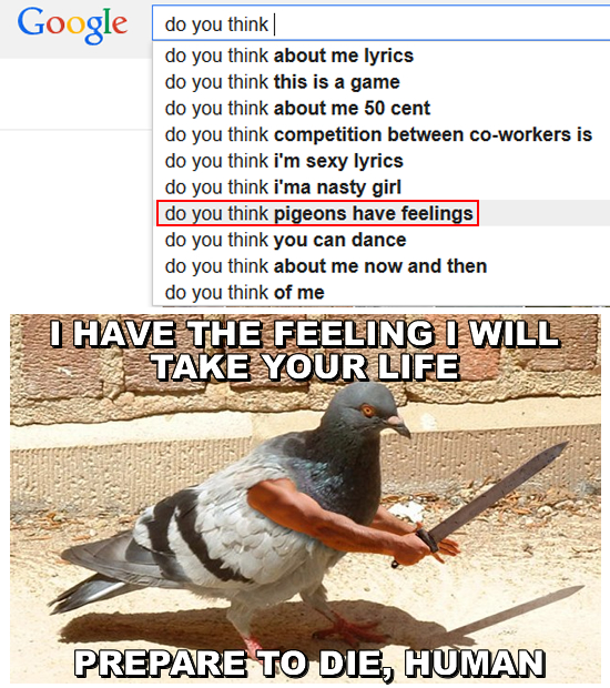 do you think pigeons have feelings
