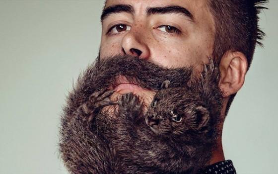 Animal Beard 2 560x350