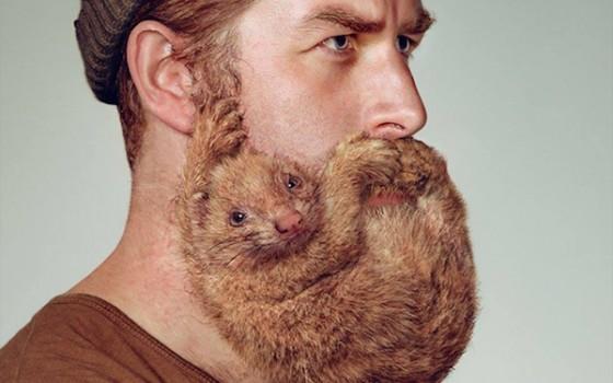 Animal Beard 3 560x350