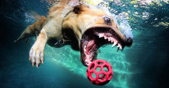underwater photos of dogs seth casteel 10 560x294