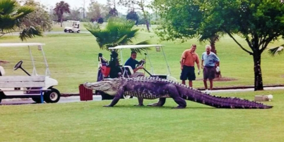 Gator Golf Course 560x280