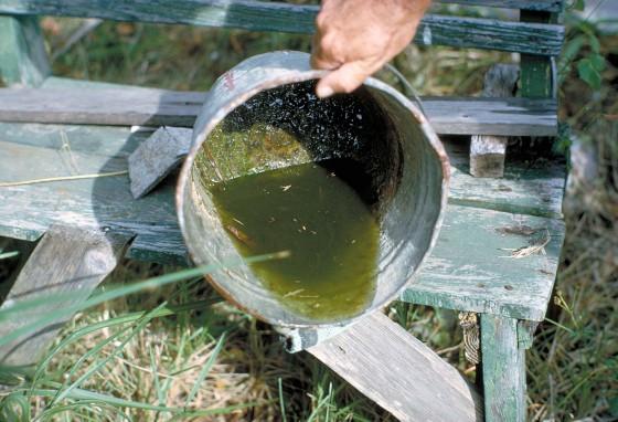 algae and larvae in bucket highres 560x382