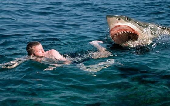 sharkattack 1778841a 560x350