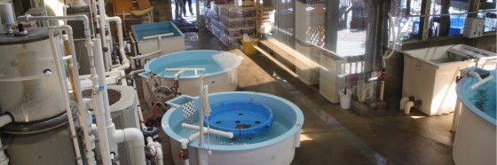Marine Science Center Rehab 560x186