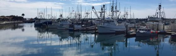 San Diego Marina 1 560x181